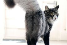 Cats / by Olga Sugden