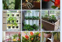 indoor gardenings tips