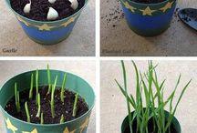 DIY: Plant - Vegetables/Fruit