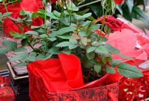 Ditch the Roses this Valentine's Day...and Buy a House Plant! / Let's get our loved ones house plants for Valentine's Day!!