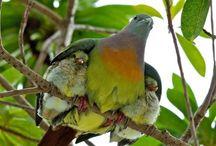 Amazing Bird pics off Pinterest