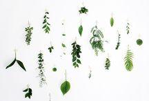 NATURE / Pretty plants.