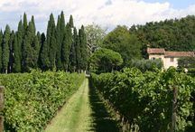 Wine trips / The perfect environment to enjoy good times with the best wines