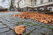 Classy Autumn / Jesień piękna, klasyczna, wyrafinowana. Złota polska. Taka, jaką ją lubimy.