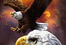 Águilas norte ameroca