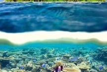 Sweet ocean pics