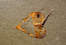 On the ground of my intimate beach / A collection of wonders founds at the shoreline, a reflection of a vast mystery thrown on my feet.