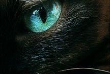 Les yeux des chats / Hypnotique