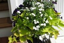 Plants in Pots / by Allison Barr