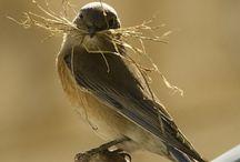 Birds - Nests