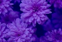 perfect purple*** / by Olivia van Hoogstraten