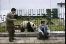 Приколы с животными 99 плюс - канал Youtube / Приколы с животными видео. Fun with animals video