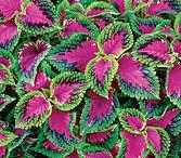Plants N Flowers