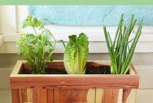 vegetable scrap gardening