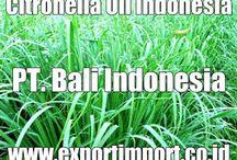 Supllier Clove Leaf Oil Indonesia