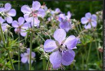 Garden - Meadow