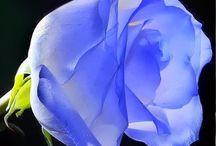 Flors / Flors
