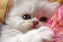 Adorable Kitten heads