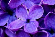 •Violet•