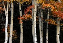 Autumn (ಶರತ್ಕಾಲ)