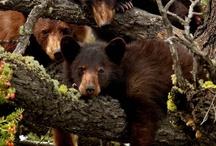 Bears, Bears, and more Bears / by Jeanne Newby