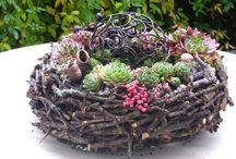 Pflanzen & Garten