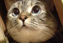 Ένα γατάκι =3