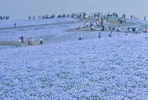 Japon un jour, Japon de tous les jours / Bienvenue sur le tableau collaboratif avec pour thématique: LE JAPON!  Ici vous pourrez retrouver différentes facettes du Japon, vu par tous, au quotidien et ainsi vous inspirer pour votre futur voyage au pays du Soleil-Levant