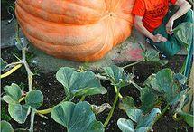 Giant Fruits n Vegetables