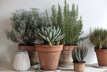 plant.it