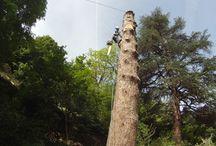 Entreprise d'élagage et d'abattage d'arbre en Ardèche / L'entreprise SEVE est votre spécialiste de l'élagage pour préserver, restaurer et entretenir votre patrimoine arboré. Élagueur de formation depuis 2008, j'interviens avec mon équipe dans toute l'Ardèche.