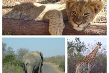 Zuid-Afrika / Rondreis, safari