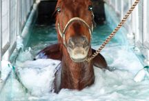 Tipy a trick for horses