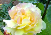 Garten / Blumen
