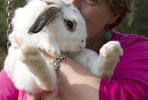 sarah mijn konijn