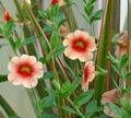 Garden Plants / Plants for my garden  / by Little Estelle Decor