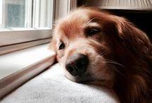 | Puppies | / Cute puppies | Animal Aesthetic