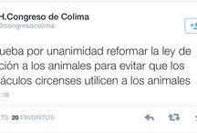 #CircosSinAnimales