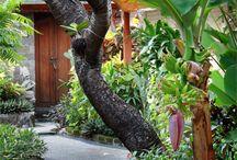 Bali courtyard gardens