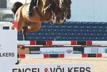 Imothep / 2003 Stallion by Indoctro x Calvados Dominard Approved Ambassador BWP, KWPN, AHHA, RPSI, OL & ZfdP Standing at stud Grand Prix Show Jumping Owned by Hyperion Stud