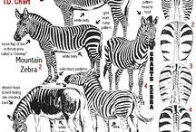 Wildlife Factfile