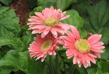 Flora / Flowering plants
