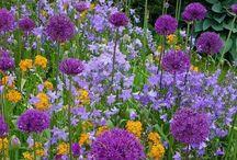 Kvety vysatby