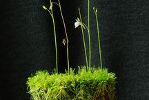 Pflanzen / Ideen für die Wohnung und den Balkon