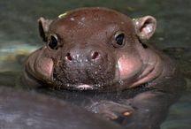 Hippo.Happy