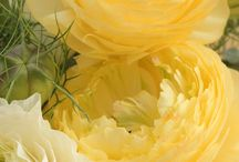 yellow yummy / by Diane Marshall