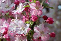 Ihana kevät. Spring time 2