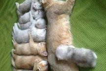 Sehr süße Tierfotos von Katzen Hunde und viel mehr Tiere