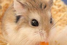 hamsters :-)