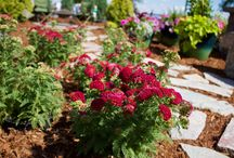 Softscapes / Flowers, Plants, Trees, Flowerbeds, Shrubs